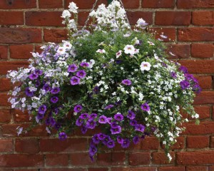 6193-beautiful-hanging-basket